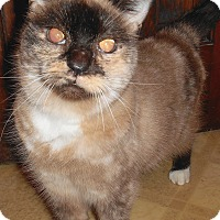 Adopt A Pet :: Natalia - Chattanooga, TN