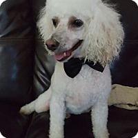 Adopt A Pet :: Andy - Kansas city, MO