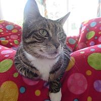 Adopt A Pet :: Tumblelina - Coos Bay, OR