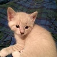 Adopt A Pet :: Preston - San Jose, CA