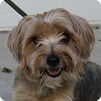 Adopt A Pet :: Toby - Harrisonburg, VA