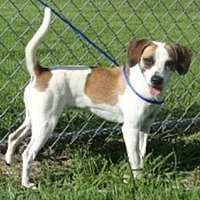 Adopt A Pet :: Dixie Rose 16 pounds - Olive Branch, MS