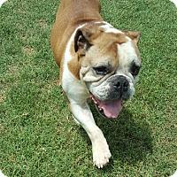 Adopt A Pet :: Bruce - McKinney, TX
