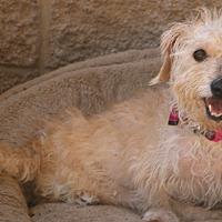 Adopt A Pet :: Tilda - needs a loving home - Bedminster, NJ