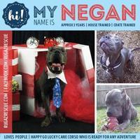 Adopt A Pet :: Negan - New Port Richey, FL
