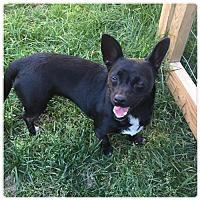 Adopt A Pet :: Esmee - Holly Springs, NC