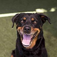 Adopt A Pet :: OLIVE - Bonita, CA