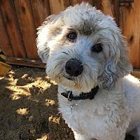Adopt A Pet :: Bandit - Newport Beach, CA