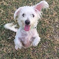 Adopt A Pet :: Sunshine - Sacramento, CA