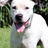Adopt A Pet :: Apollo - Lacon, IL