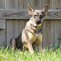 Adopt A Pet :: Daisy - Joplin, MO