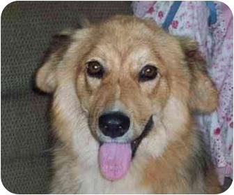 Corgi Mix Dog for adoption in Chapel Hill, North Carolina - Loren