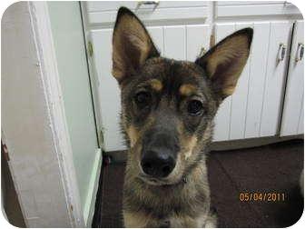 Husky/Shepherd (Unknown Type) Mix Puppy for adoption in Saskatoon, Saskatchewan - Aeron