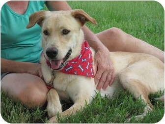 Labrador Retriever Mix Dog for adoption in Portsmouth, Rhode Island - Maxwell- local!