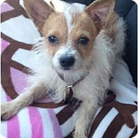 Adopt A Pet :: Leon - Oceanside, CA