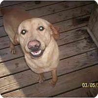 Adopt A Pet :: Baxter - HOBOKEN, GA