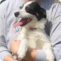 Adopt A Pet :: Thomas - kennebunkport, ME