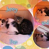 Adopt A Pet :: Jenny - Washington, DC