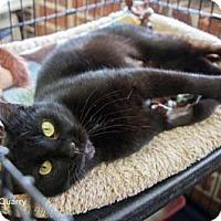 Adopt A Pet :: Quarry - Merrifield, VA