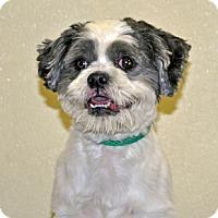 Adopt A Pet :: Miles - Port Washington, NY