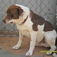 Border Collie Mix Dog for adoption in Anton, Texas - Owen