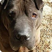 Adopt A Pet :: Mr Bojangles in NC - Apple Valley, CA