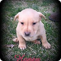 Adopt A Pet :: Honey - Denver, NC