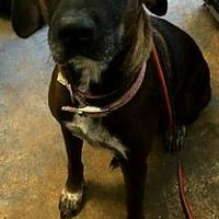 Adopt A Pet :: Suzie - Brownwood, TX
