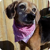Adopt A Pet :: Bonnie B-RIP 8/5/17 - Apple Valley, CA