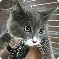 Adopt A Pet :: Raja - Culver City, CA