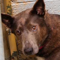 Adopt A Pet :: Lucy - Hattiesburg, MS
