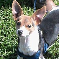 Adopt A Pet :: Chelsey - Maynardville, TN
