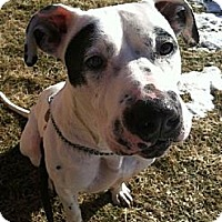 Adopt A Pet :: Anya - Cary, IL