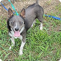 Adopt A Pet :: Sparky - Houston, TX