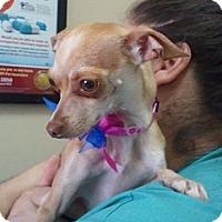 Adopt A Pet :: Dixie - Encinitas, CA