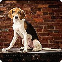 Adopt A Pet :: Cherie - Owensboro, KY