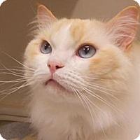 Adopt A Pet :: Betty - Maywood, NJ