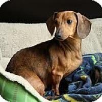 Adopt A Pet :: Rose - Staunton, VA