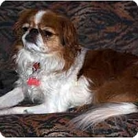 Adopt A Pet :: Rohan-tiny! - Toronto/Etobicoke/GTA, ON