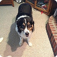 Adopt A Pet :: Foley - Washington, IL