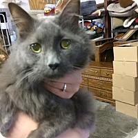 Adopt A Pet :: Mr. Cheeks Thomas - Byron Center, MI