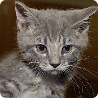 Adopt A Pet :: Travis - Medina, OH