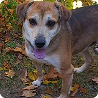 Adopt A Pet :: Fender - Fennville, MI