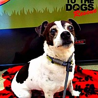 Adopt A Pet :: Ziggy - Redondo Beach, CA
