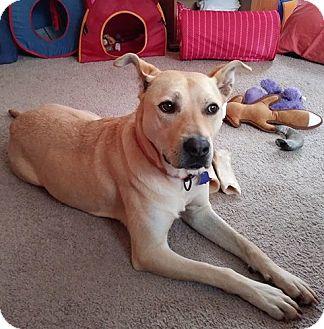 Labrador Retriever Mix Dog for adoption in Livonia, Michigan - Tori ADOPTION PENDING