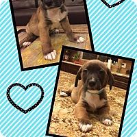 Adopt A Pet :: Hogan - Scottsdale, AZ