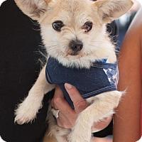 Adopt A Pet :: Lopez - San Diego, CA