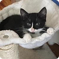 Adopt A Pet :: Daytona - Bensalem, PA