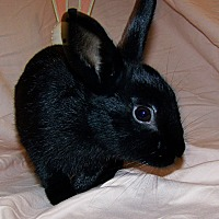 Adopt A Pet :: Joan Jett - Alexandria, VA