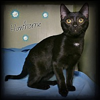 Adopt A Pet :: Hawthorne - Shippenville, PA